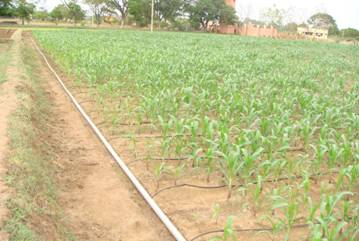 Irrigation Management Drip Irrigation