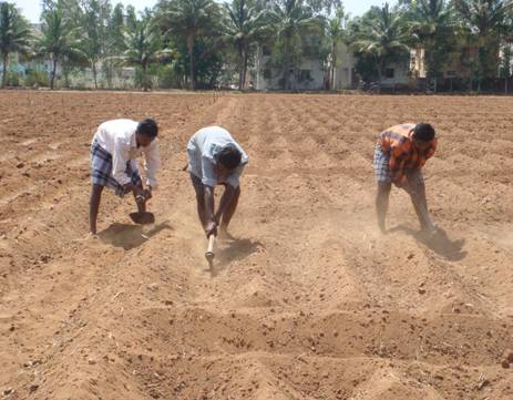 Tillage operation requirement for field crops