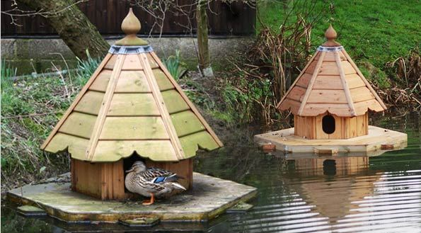 poultry duck housing and feeding animal husbandry home