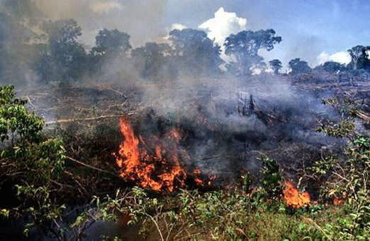 the different negative effects of deforestation Deforestation and its extreme effect on global warming from logging  exacerbating global warming isn't the only negative impact of tropical deforestation.