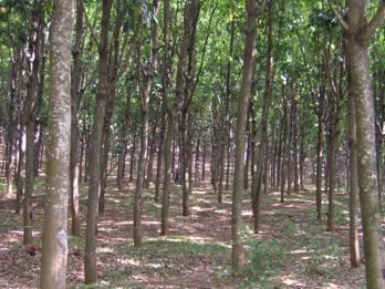 Essay on deforestation in india