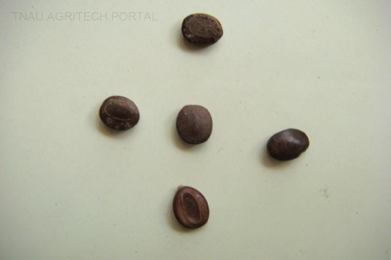 Tree Seeds Identification http://www.agritech.tnau.ac.in/forestry/forestry_tree_seeds/index.html