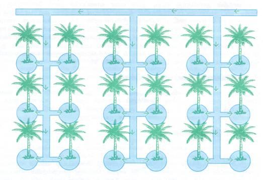 Knowledge Based Information On Coconut Irrigation